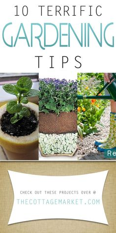10 Terrific Gardening Tips - The Cottage Market   Quick and easy tips that will make your gardening more successful!