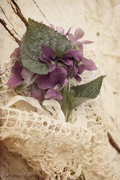 ~Wild Violet's Cottage~