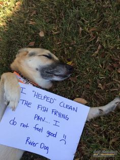Dog shaming - helped clean the fish frying oil. Funny Animal Pictures, Dog Pictures, Funny Animals, Funny Pets, Pet Dogs, Dogs And Puppies, Dog Cat, Doggies, Cat Shaming