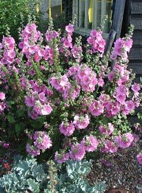 Trees And Shrubs, Go Green, Planting Flowers, Garden Ideas, Yard, Cottage, Outdoors, California, Gardening