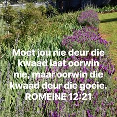 Goeie More, Faith Prayer, Afrikaans, Inspiring Quotes About Life, Life Quotes, Bible, Inspirational, Rome, Quotes About Life