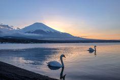 https://flic.kr/p/r21S3h   Swan Lake Yamanakako & Mt.Fuji   Swan Lake Yamanakako & Mt.Fuji  20 february 2015 17:20 Canon 6D & Sigma 35mm F7.1 1/200 ISO100