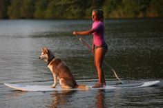 paddling with your best furry friend couldn't be more peaceful. dog sup #sup #standuppaddle www.paddlesurfwarehouse.com