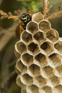 Bee and honeycomb....