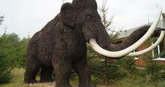 Aus dem schmelzendem Permafrost Sibiriens tauchen immer wieder Mammutkadaver auf. Gesucht werden perfekt erhaltene Überreste um DNA-Proben zu entnehmen. Das Wunschziel ist, eines Tages die Wiedergeburt der Mammuts zu erreichen.