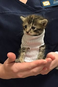 People on the internet have fallen in love with a kitten that, after being saved from Hurricane Matthew, got a little sock sweater to keep warm. | People Are Obsessed With This Rescued Kitten In A Sock Sweater