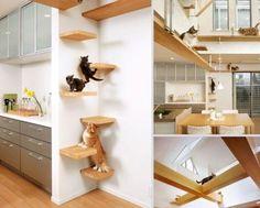 Dört Ayaklı Ev Arkadaşlarımız İçin Ergonomik Tasarımlar