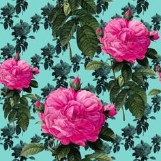 Redoute' Roses ~ Bright Pink & Robin's Egg Blue ~ by PeacoquetteDesigns on Spoonflower ~ bespoke fabric, wallpaper, wall decals & gift wrap ~ Join PD  ~ https://www.Peacoquette.com  #Spoonflower #Peacoquette