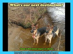Reminders in Spending Time Outdoors with Your German Shepherd -- GSD Photos, Information