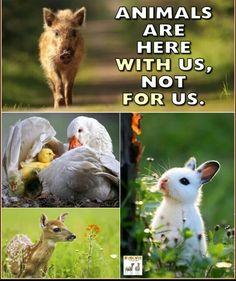 45 Vegan Advocacy Posters - Part 2 Vegan Facts, Amor Animal, Vegan Quotes, Vegan Memes, Why Vegan, Animal Protection, Love And Respect, Animal Welfare, Look At You