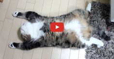Click to see this great compilation of Maru the cat