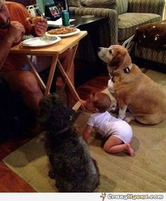Cutest picture of two dogs and a baby waiting to get served food