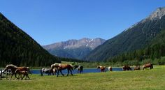 Hotel Austria, Hotel Reservations, Hotels, Mountains, Nature, Travel, Animals, Missing Home, Mountain Range