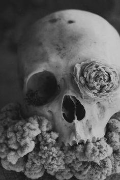 Calavera (Dia de los Muertos)