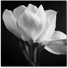 """'Gardenia' Canvas Print by Michael Harrison 18"""" x 18 ($70) ❤ liked on Polyvore featuring home, home decor, wall art, backgrounds, flowers, flower wall art, flower stem y blossom wall art"""