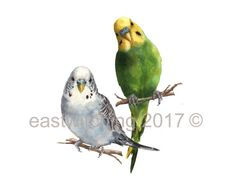 """Aren't these birds adorable!? I paint budgie portraits in watercolour - pleased click on the """"visit website"""" link to request your own budgie portrait - I do single, double or more!  Watercolor Budgie Painting Budgie portrait by eastwitching on Etsy #budgie #budgerigar #parakeet #custom #portrait #personalised #commission #bird #watercolor #watercolour #painting #budgie #lover #gift #avian #art #"""