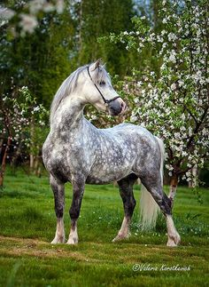 ⇔ SOMEONE BUY ME A HORSE LIKE THIS PLEASE ⇔