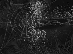 Tycho - Cascade  from Synesthesiæ Films