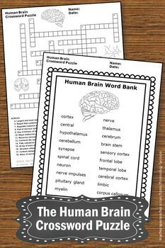 Elementary and middle school teachers will download printable human brain vocabulary worksheets including a crossword puzzle and writing papers for note taking. This packet is a fun supplement to a human body systems unit study for upper elementary (4th, 5th, 6th, 7th grade) and middle school. #humanbrain #forkids #teaching #science #humanbodysystems #bodysystems #sciencevocabulary #crosswordpuzzle #brainworksheets #printables #tpt #promotingsuccess #5thgrade #6thgrade #middleschool