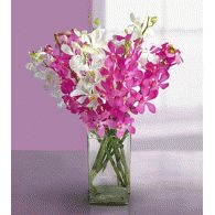 Soft Toys Online Shopping, New Year Gifts to India, Valentine's Day Gifts by India Florist, India Shopping Send Gifts To India, Send Flowers To India, Buy Plants Online, Gift A Plant Online, Send flowers on birthday, anniversary, weddings