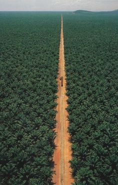 Palm Oil Plantation in The Congo Beautiful World, Beautiful Places, Trees Beautiful, Great Places, Places To Go, Amazing Places, Congo Brazzaville, Foto Poster, All Nature