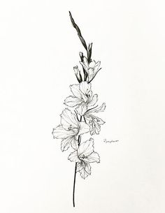 0240e64f1 Gladiolus. August flower Known for its meaning of strength, perseverance,  and infatuation. Gladiolas TattooGladiolus ...