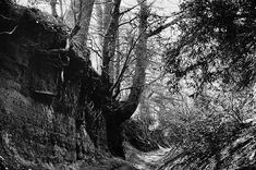 Take a look at how Robert Macfarlane, Dan Richards and Stanley Donwood built their own press to hand-produce a book Tree Tunnel, Caspar David Friedrich, Forest Path, John Muir, Take Me Home, Going Home, The Other Side, Natural History, The Guardian
