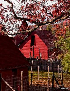 Red Barns by dcsorrell, via Flickr