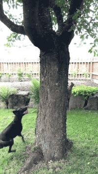 Share this I catch squirrel! I catch you!! Animated GIF with everyone. Gif4Share is best source of Funny GIFs, Cats GIFs, Reactions GIFs to Share on social networks and chat.