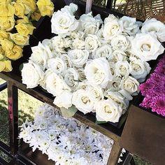 Blooms Hello Sunday! Bom dia Domingo lindo!!! by camilacoelho
