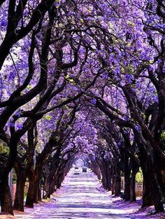Les plus belles forets du monde australie
