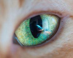 Andrew Marttila é especialista em clicar gatos e já fotografou felinos famosos como Grumpy Cat, Lil Bub e Pudge