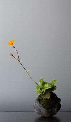 Collector & Co — stitch 9 / junko oki Ikebana, Mini Bonsai, Moss Garden, Bonsai Garden, Plantas Bonsai, Mini Plants, Paludarium, Miniature Plants, Deco Floral