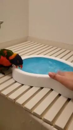 Goofy bird hopping around. Goofy bird hopping around.,Animals Related posts:What could go wrong - tik tok🌎🔥🌑 - tik tok- tik tok - So. Funny Birds, Cute Birds, Pretty Birds, Cute Little Animals, Cute Funny Animals, Cute Animal Videos, Funny Animal Pictures, Funny Parrots, Cute Creatures