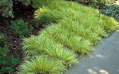 Loropetalum Companion Plantings Planting Combos