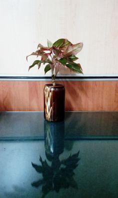 Glass Vase, Nursery, Green, Nature, Flowers, Plants, Home Decor, Naturaleza, Decoration Home