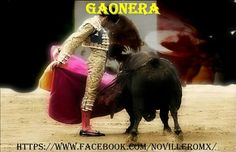 Gaonera