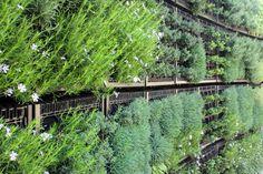 Edible Herb Wall