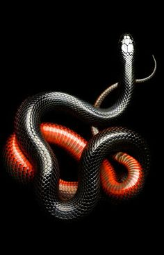 Snakes can represent sexual or psychic energy, or hidden danger. Depends on the circumstances - is it coiled, ready to strike? Then be careful in your dealings with others. Did it bite you? Take care of your safety. Are you hurting yourself - consciously or unconsciously?  Use your power wisely.