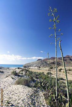 Dunas, playa de Mónsul. ALMERÍA