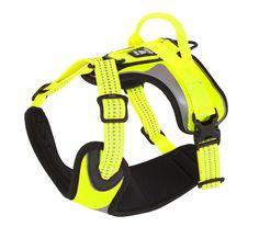 Hurtta Lifeguard Dazzle Harness