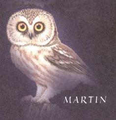 Martin - Guardians of Ga'Hoole Wiki