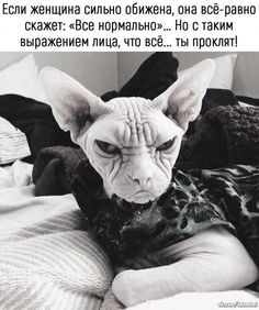 Она прекрасна Walk Around The World, Russian Humor, Cute Cats And Kittens, Sphynx, Funny Cat Pictures, France, Funny Cats, French Bulldog, Dog Cat
