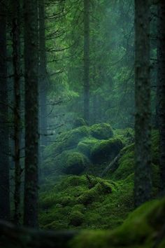 Untouched beautiful forest in Photo by Explore. Magic Forest, Tree Forest, Dark Forest, Conifer Forest, Dark Green Aesthetic, Nature Aesthetic, Forest Photography, Landscape Photography, Photography Store