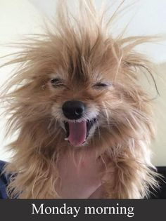 Attack of the funny animals Photos) Funny Animal Photos, Funny Animal Memes, Funny Dogs, Funny Animals, Funny Pictures, Cute Animals, Animal Quotes, Monday Morning Humor, Funny Good Morning Quotes