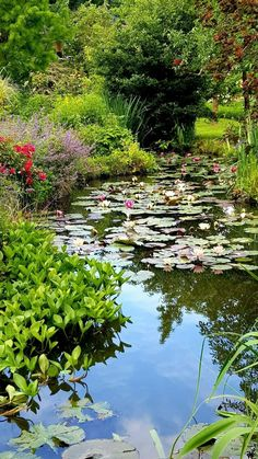 Garden and pond Garden Types, Small Water Gardens, Image Nature, Pond Life, Pond Design, Lily Pond, Ponds Backyard, Summer Garden, Garden Pond
