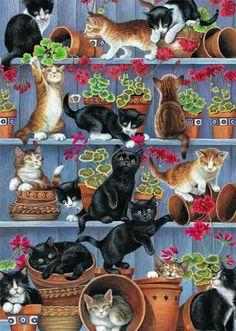 Gatinhos e os vasos