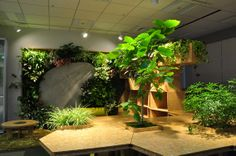 積極的に緑化したオフィス空間。Office space in which trees was planted positively.