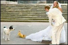 Dogs & Weddings - sometimes things don't go as planned!