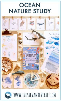 Montessori Activities, Science Activities, Toddler Activities, Geography Activities, Reggio, Layers Of The Ocean, Snail And The Whale, Ocean Unit, Art Education
